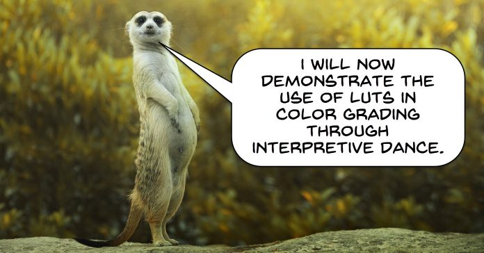 Comical image of a meerkat proposing to demonstrate color grading