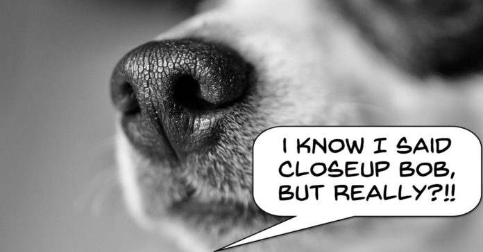Image of dogs nose as example of too close up to the subject.