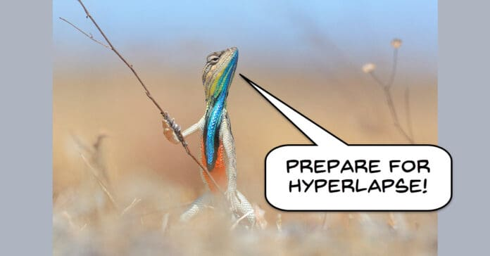 Humorous image of a lizard announcing a hyperlapse.