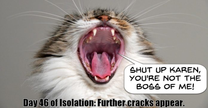 Cat going crazy in isolation.